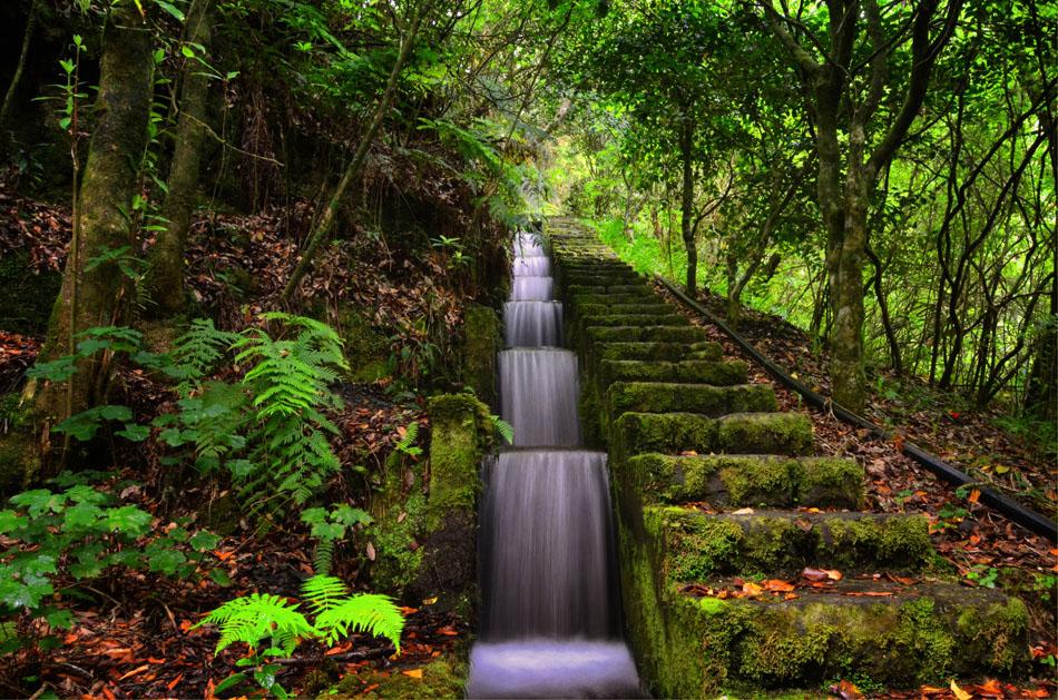 Ribeiro Frio Natural Park, Madeira