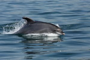 Avistamiento de Delfines en Setúbal