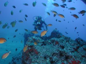 Scuba diving in Madeira