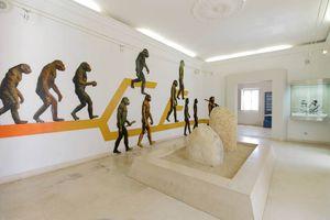 Museu Municipal de Arqueología de Albufeira
