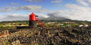 Paisagens da Vinha, Ilha do Pico