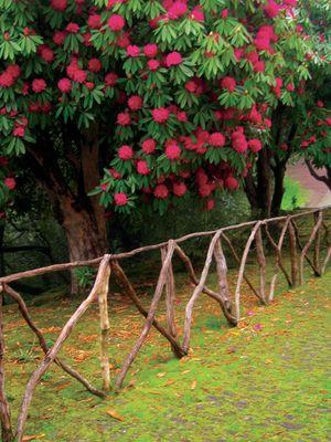 Parque das Queimadas, Madeira