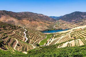 Región del Douro