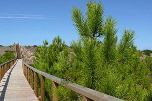 Reserva Natural das Dunas de S.Jacinto, Aveiro
