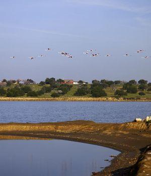 Reserva Natural do Sapal, Algarve
