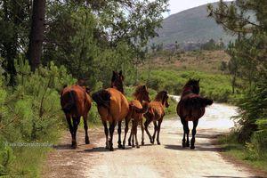 Serra do Gerês, Parque Nacional de Peneda-Gerês