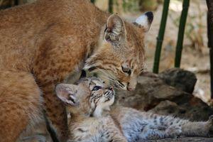 Zoo Lagos, Algarve